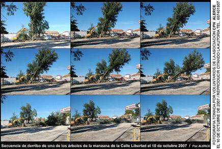 CPN- Alerce denuncia la tala de árboles realizada por el Ayuntamiento de Torrejón de Ardoz.