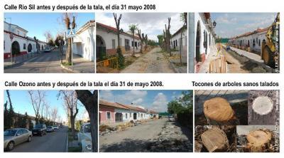 CPN- ALERCE denuncia talas indiscriminadas en Torrejón de Ardoz.