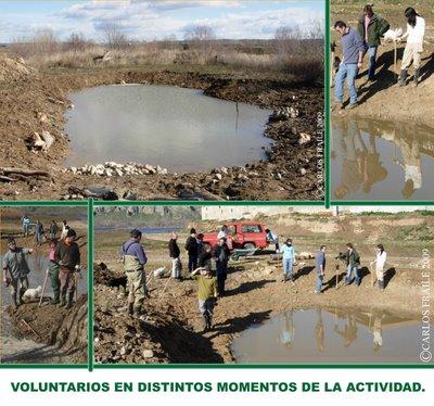 CPN- Naumanni en acción a favor de los anfibios del Parque del Sur-Este Madrileño.