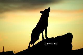 """Carlos Sanz, prestigioso fotógrafo y divulgador de la naturaleza y colaborador de FCPN, """"Reconocimiento Ones Mediterrània de Defensa del Patrimonio Natural"""" y Premio Panda de comunicación ambiental 2008"""