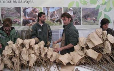 El Fapas reparte gratuitamente 5.000 cerezos en Gijón